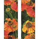 Orange Poppies Banner Double