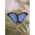 Blue Morpho House Flag